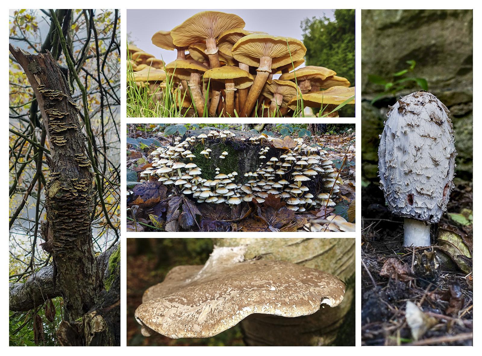 Fungi Collage