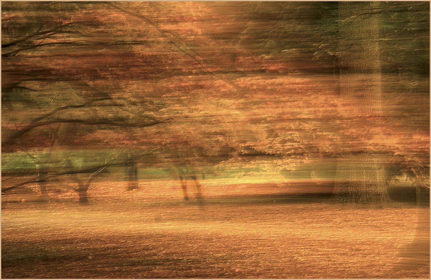 Trees at Thorpe Perrow