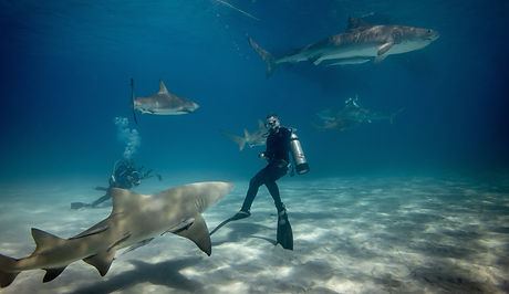 Diving with sharks in the Bahamas_edited.jpg