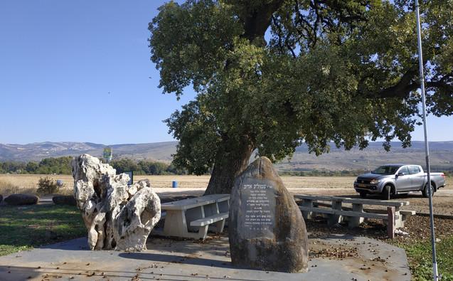 עץ האלון העתיק