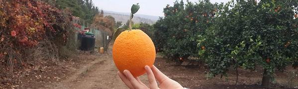 תפוז הניו הול