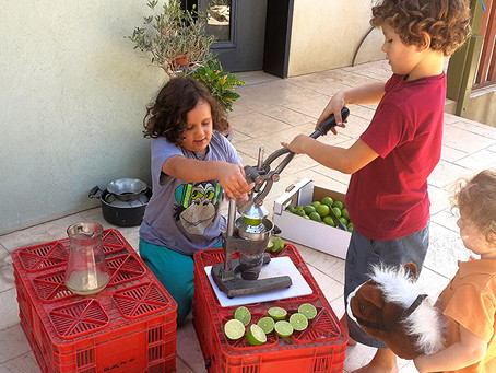 נתחיל מעץ לימון הליים ונקנח בכוס הלימונדה