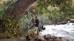 דיג בירדן