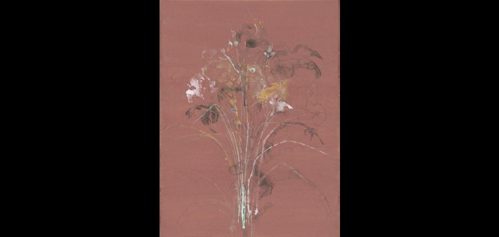 Callis Lilies 水仙百合 2017