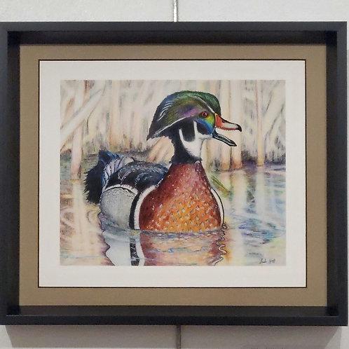 """""""Wood Duck"""" by Chandler Hiatt"""