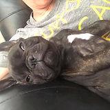 figgy_sleeping.jpg