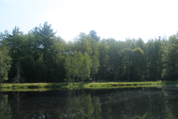 Swan_Lake_in_Upstate_New_York