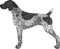 Black & White Patched Ticked GSP.jpg