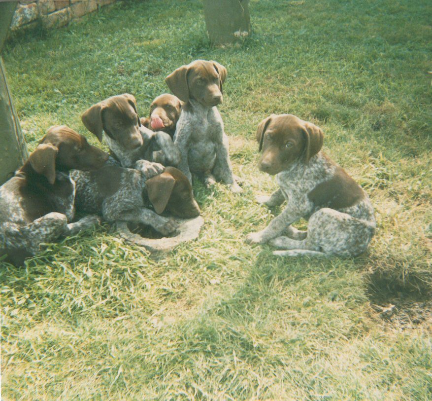 Bow's litter of pups