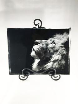 sandblast_lion_CC