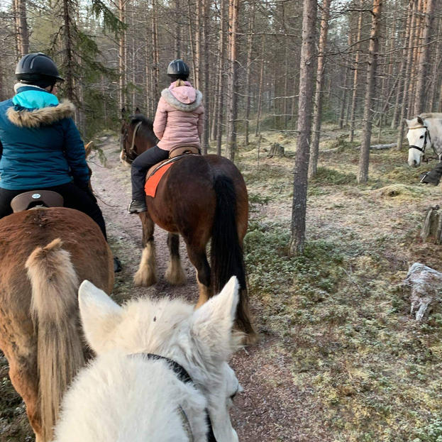 Trying to ride a horse in a Finnish forest