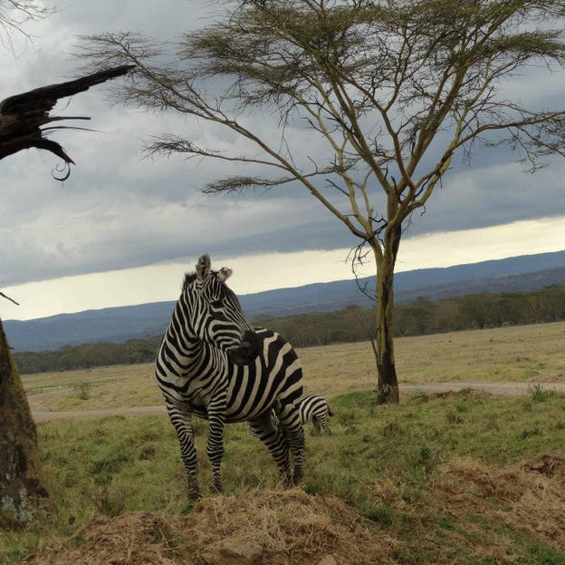 On safari in 2013, Nakuru National Park