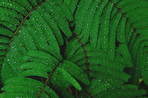 Verde ornamentale