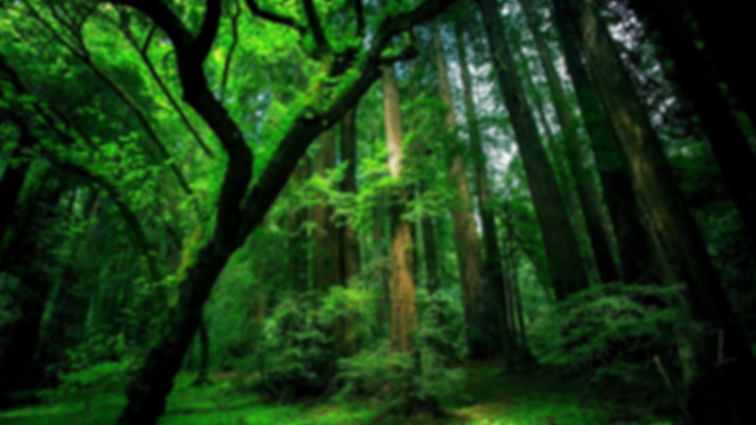 forest-trees-green-moss-old.jpg