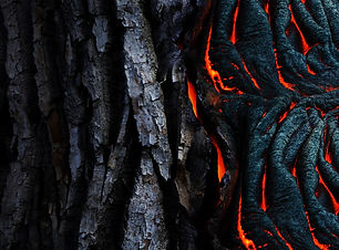 abstract-art-bark-983200.jpg