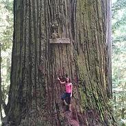 Redwood_edited.jpg