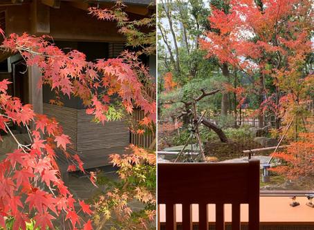 茶室「清庵」の紅葉