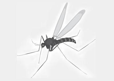 Защита от насекомых