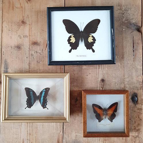 Papillons Déco