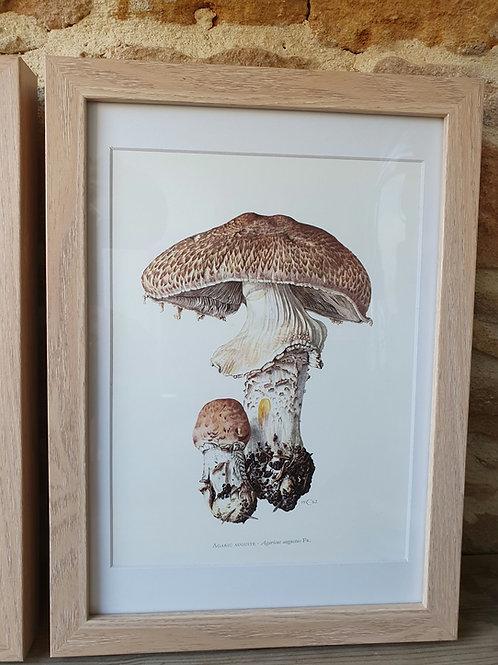 Cadre champignon