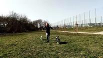 Sprint mit Hunden.mp4