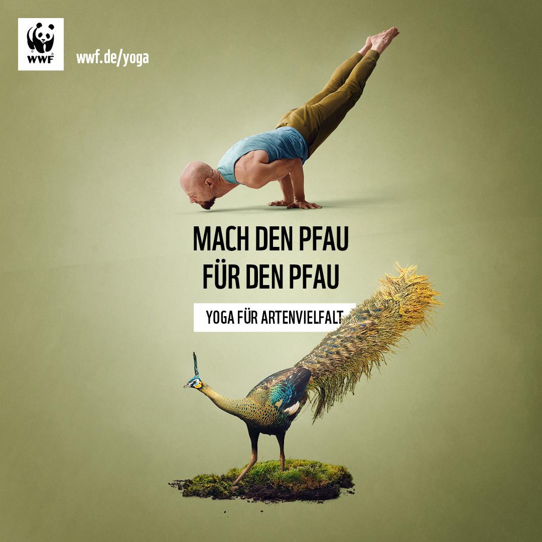 WWF-YogaFuerArtenvielfalt-1080x1080-Pfau