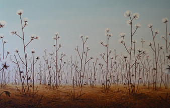 2010-Cotton.JPG