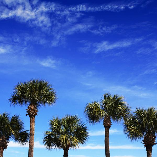 Florida. 2010.