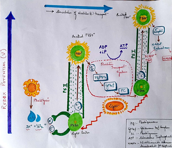 Cheat Sheet Photosynthesis