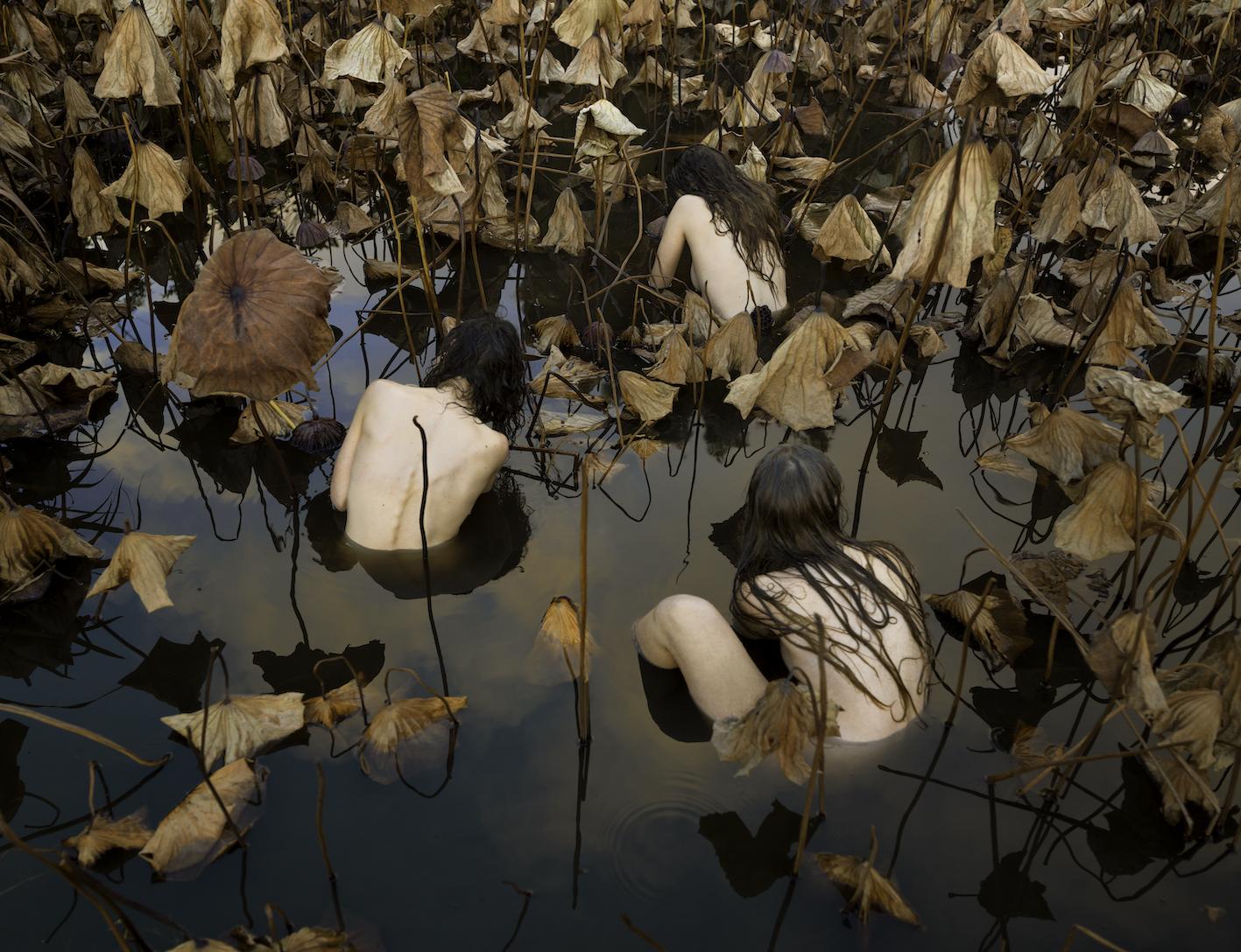 Sacred Lotus (Nelumbo nucifera) in Autum