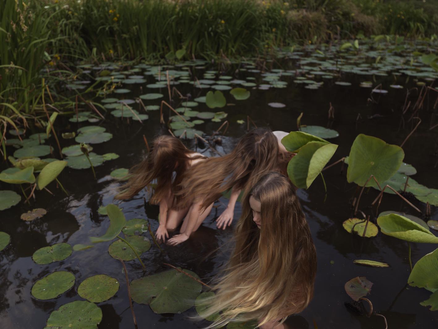 Sacred lotus (Nelumbo nucifera) in Sprin