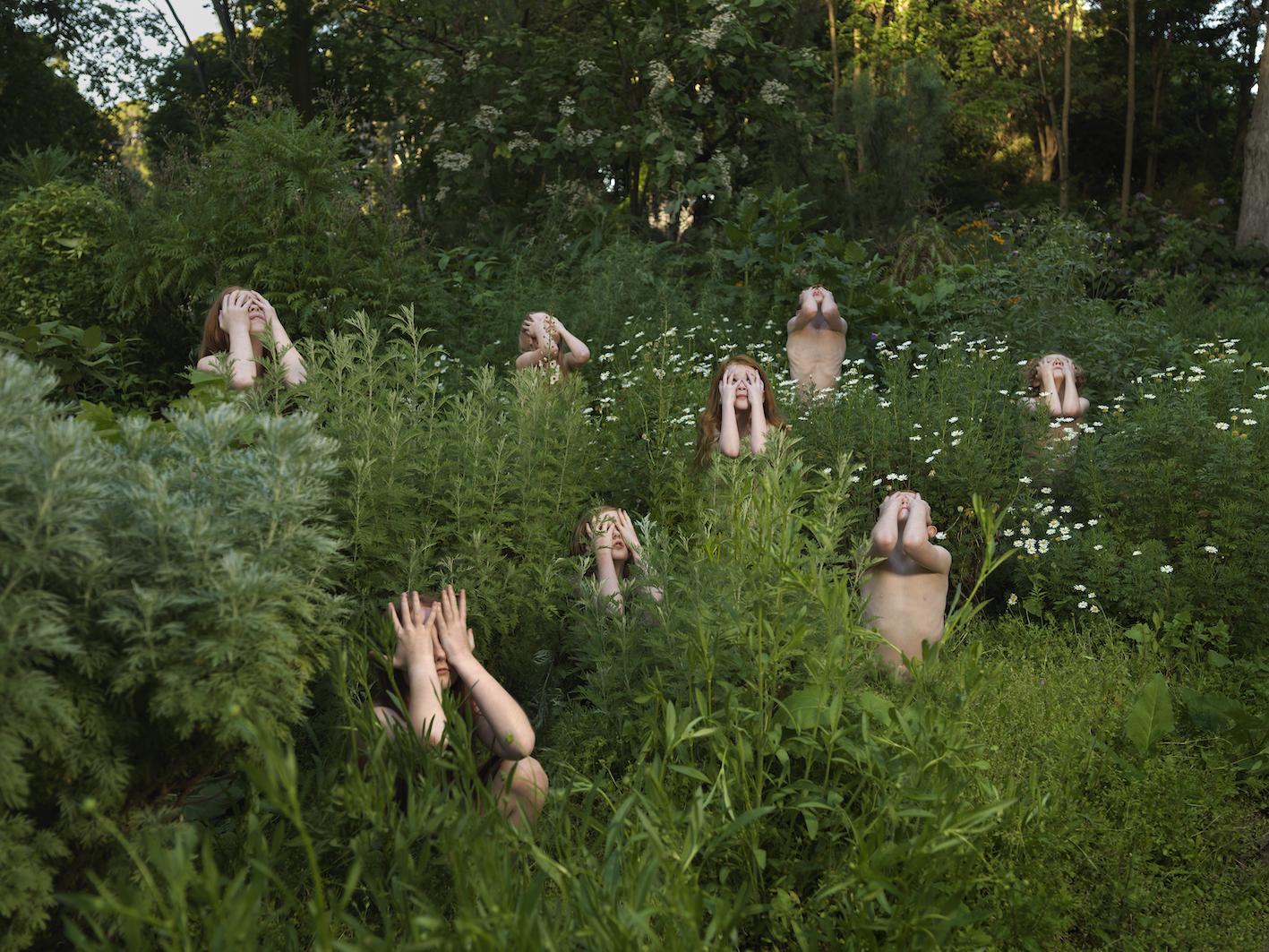 Wormwood (Artemisia absinthium) in Sprin