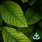 Texturas de Folhas