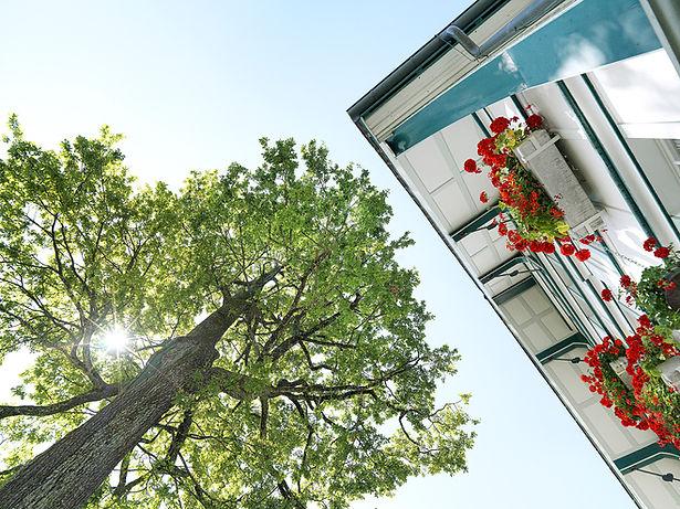 Pension Alpenheim Teufen, Garten, Blumen, Haus, Baum