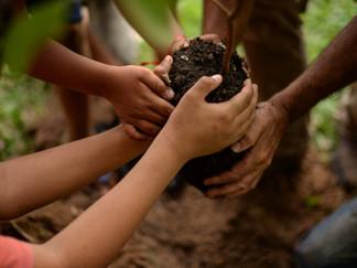 Em contraponto à alta no desmatamento, MST vai plantar 100 milhões de árvores pelo Brasil
