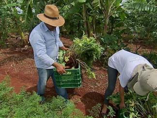 Bolsonaro veta Lei de incentivo à agricultura familiar, a Lei Assis Carvalho