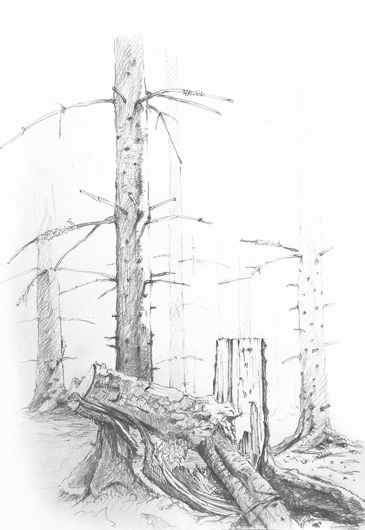 Waldzeichnung Schwarzwald
