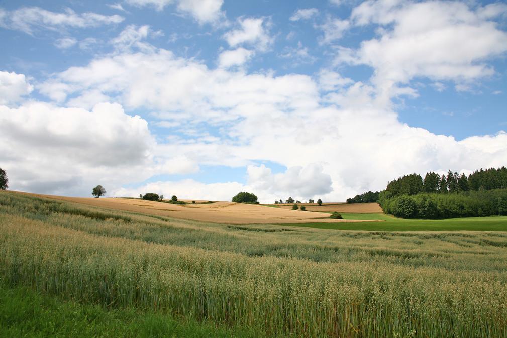 Oberpfälzer Landschaft