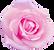 rose7-4_1024×954.png