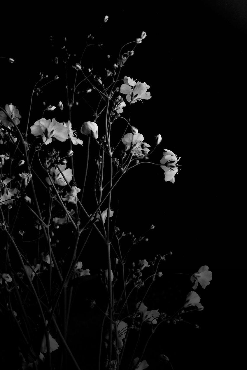 Stopit_natürliche_seife_Blumen