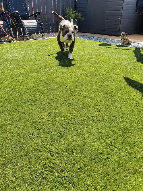 Laxton 42 Luxury Artificial grass