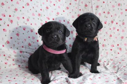 2black pups girls.jpg