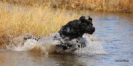 Leo_Water_EntryMay2015_By.Olivia_IMG_139