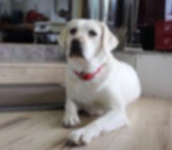 Zoey Girl 1.jpg
