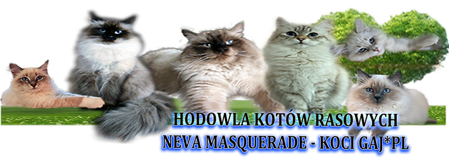 NOWY.png