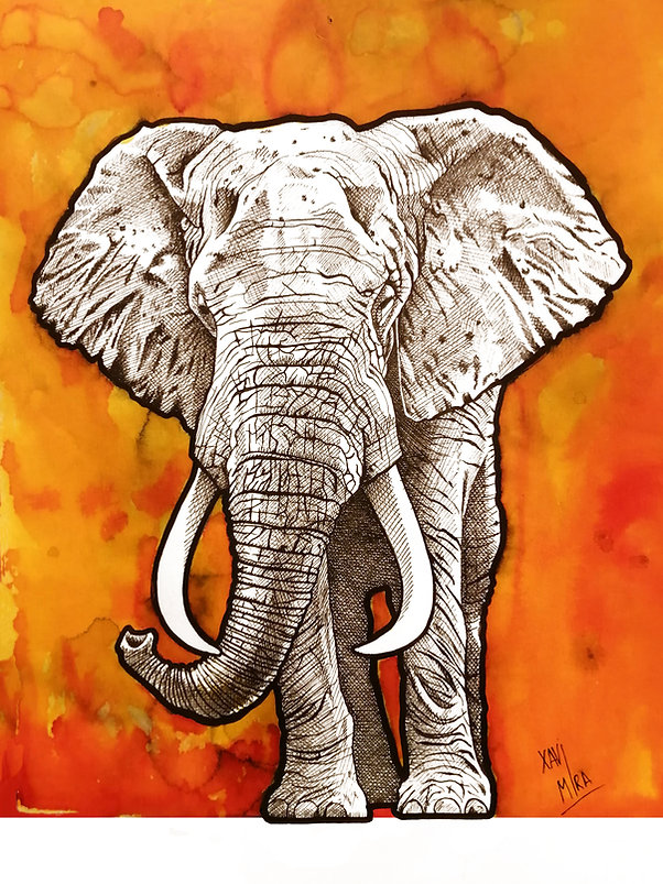 El elefante.jpg