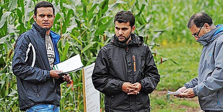 corn-research-3142942_large.jpg