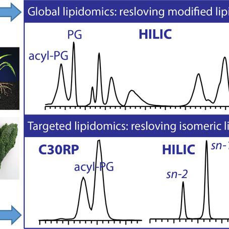 Targeting Modified Lipids during Routine Lipidomics Analysis using HILIC and C30RP LC-MS