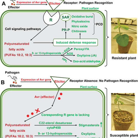 Recent advances in bio‐physiological aspects of membrane lipid derivatives in plant pathology