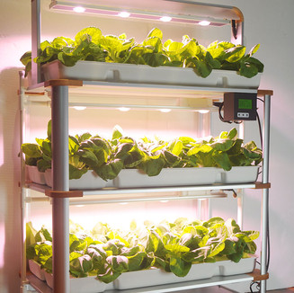 hydroponic-homegrow-system.jpg